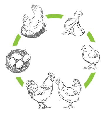 Ciclo de vida de un animal