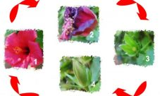 Ciclo de vida de una flor