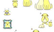 Ciclo de vida del perro