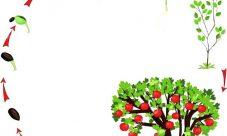 Ciclo de vida de los árboles