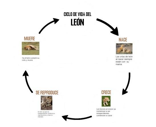 Ciclo de vida del león