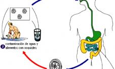 Ciclo de vida de los protozoarios