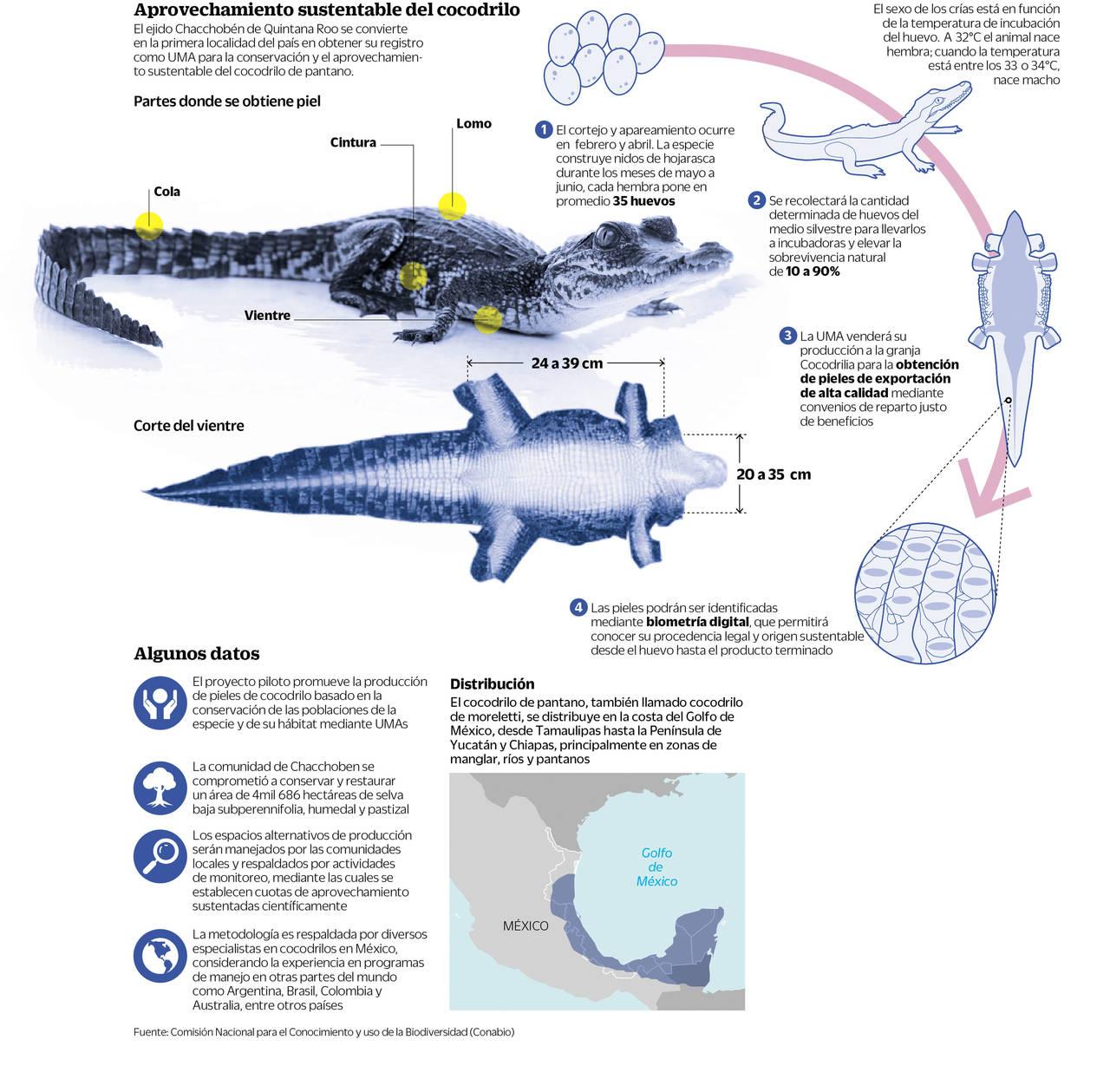 descubre el ciclo de vida del cocodrilo