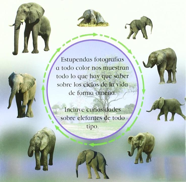 conoce del ciclo de vida del elefante