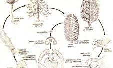 Ciclo de vida del pino